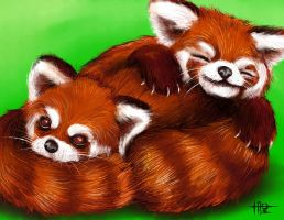 Red Panda Snugglebabies by juugatsuhoshi