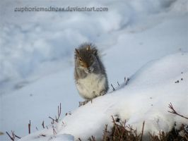 Squirrel on a Snowy Bush by euphoricmadness