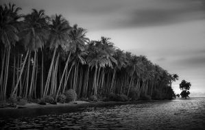 Coconut Island by Hengki24