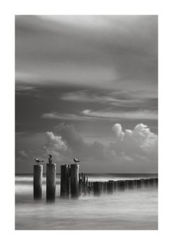 Posts and Gulls by Andross01