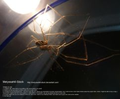 Spider and Mirror Stock 2 by Melyssah6-Stock