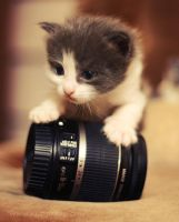 Lens Kitty by KatherineDavis