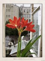 Flowers on a window sill 2 by firework