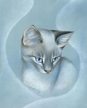 Blue-tabby-point by tushkanchic