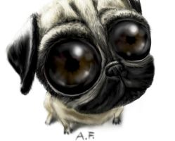 Pug by AFunny