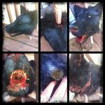 Severed wolf head prop: details by Sharpe19