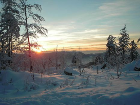 Black Forest - Winter No.1 by f0x0r