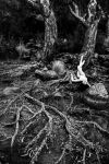 tree roots by GazzaA