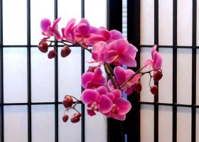 Pink Orchid by BlindedVisions