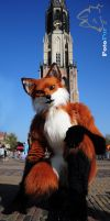 Fox by FotoFurNL