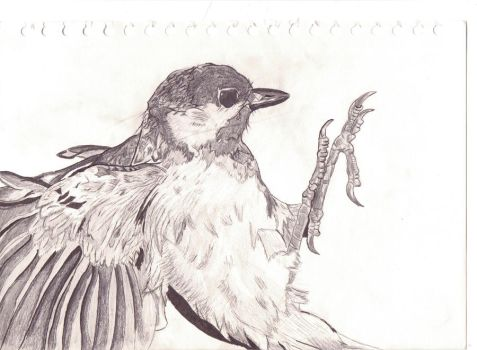 Great Tit sketch by Undercoverpillow