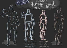 Anatomy Guide - Part One by ScriBlu