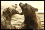 Bear Fight II by TVD-Photography