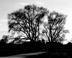 Black and White Tree by yellowcaseartist