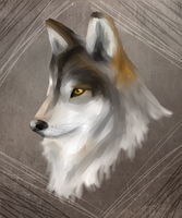 Wolf by PineMelons