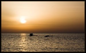 Swans and sunset by Phoenixstamatis