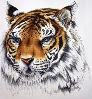 Tiger by Tyleen