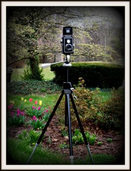 Davidson Star-D Conquest tripod by FallisPhoto