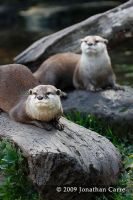 Otter Siblings by InsaneGelfling