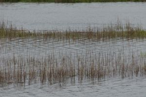 Marsh Grass (stock)36May 27, 2014 by RustedScrapMetal