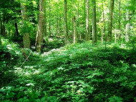 Forest Stock 03 by Solira-Stock