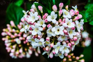 Blossom by AGilsonPhotography