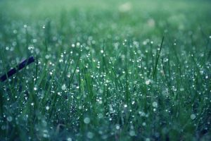 Grass Bokeh by missunderztood