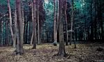 Lovely dark forest by laluna19
