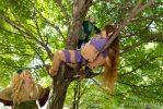 Elves in trees by IllynReaver