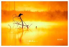 patience by werol
