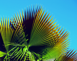 Palm Tree 4 by Humble-Novice