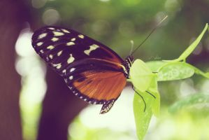 Butterfly by Panawaii