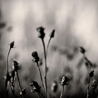 untitled flower by carrex