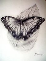Butterfly by boy140495