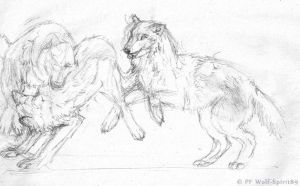 Wolves Sketches by Wolf-Spirit89