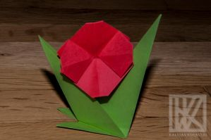 Paper Flower . . . ? by kaioian