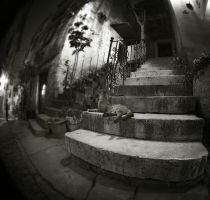 with fisheye aroundGroznjan V by Kaarmen