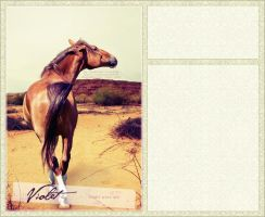 desert horse layout by renderedsublime
