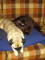 The Emo Couch by pitbulllady