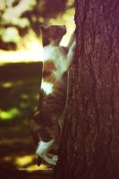 Cat climber by BambisLogic