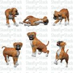 Boxer Puppies Stock 1 by Shoofly-Stock