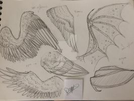 Wings study by Drago-Draw