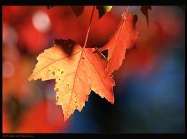 AUTUMN LEAVES by FishSauce