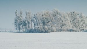 Winter Trees 1080p Wall by BSOD90