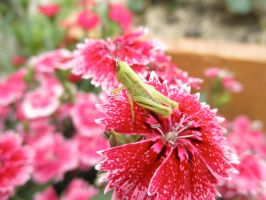 'Young Grasshopper' by ilovelucy365
