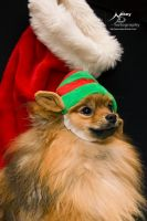 Merry Christmas Pomeranian by Nebey