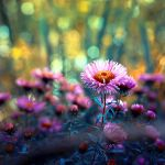 Autumn I by BaxiaArt