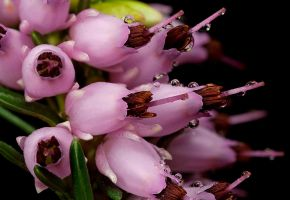 Small Flowers 2 by Alliec