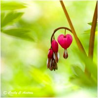 The Hidden Heart by CecilyAndreuArtwork