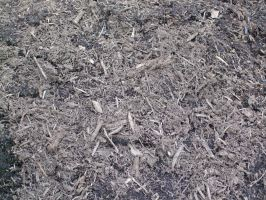 Mulch Texture 1 by Freedom-Falling